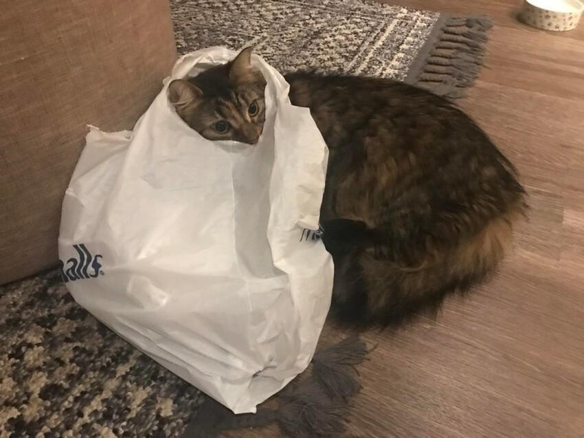 При раздаче мозгов, нашему коту досталось немного меньше
