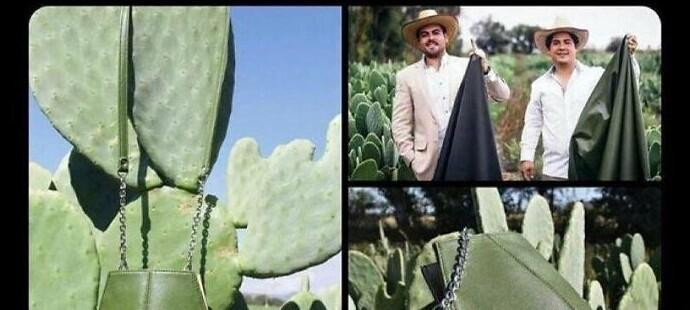 Сумки из кожи кактуса - последний писк мексиканской моды. Шкурка кактуса мягче кожи животных, но такая же прочная