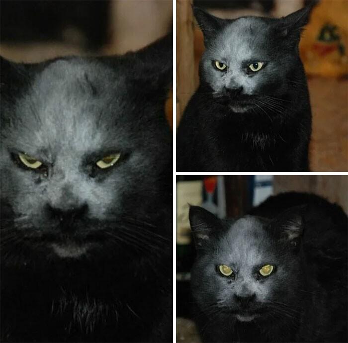 """""""Это не демон. Это кот и мука"""""""