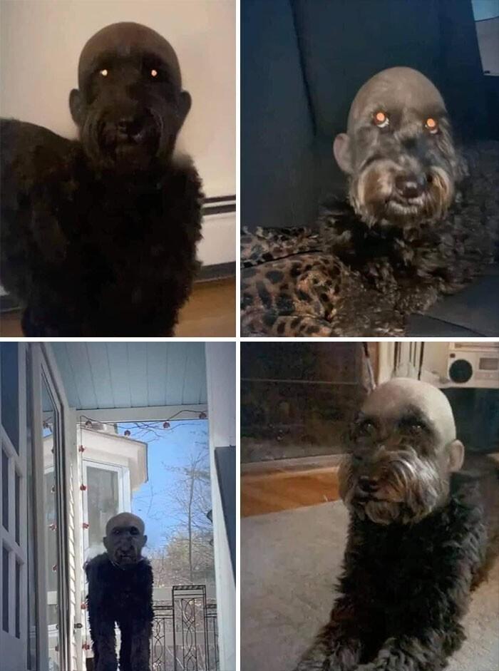 """Собака с """"лысым"""" фильтром для фото - выглядит жутковато"""