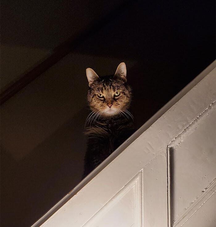 """""""Я не знаю, что я сделал не так, но прости меня, любимый котик"""""""