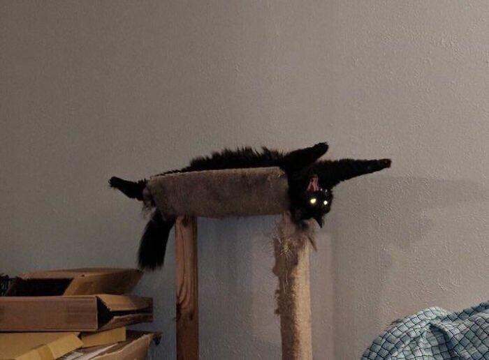 Кошки - грациозные и загадочные существа, говорили они...