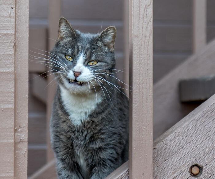 Чеширский котяра