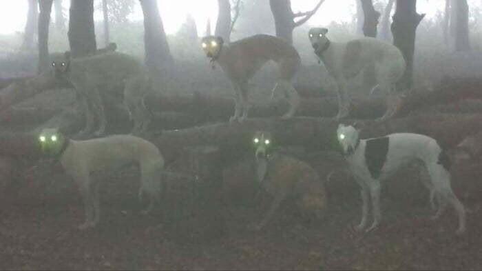 Это не место съемок ужастика, а всего лишь собаки в лесу