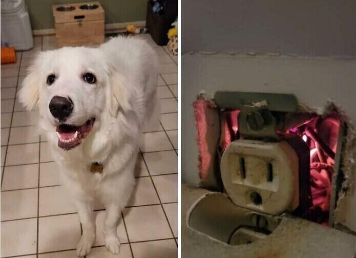"""""""Наша собака спасла нас от пожара, учуяв, что от розетки чем-то пахнет. Мы сразу вызвали пожарных, которые сказали, что если бы не она, в доме мог бы возникнуть пожар"""""""