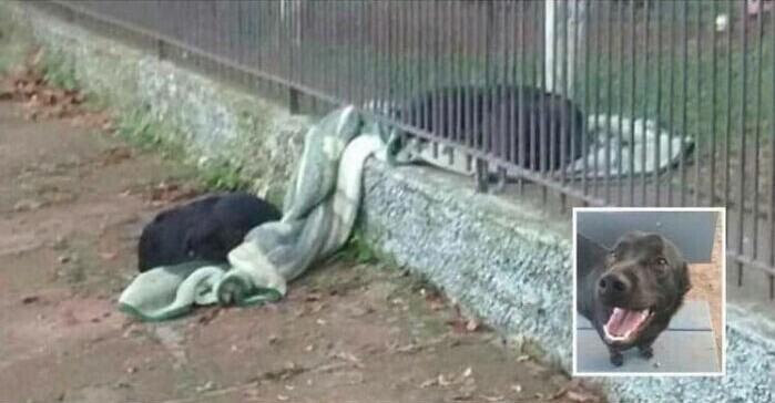 Собака, которую когда-то спасли с улицы, принесла одеяло бродячей собаке, и они поспали на нем вместе прохладной ночью