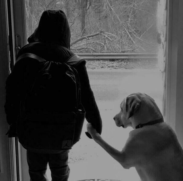 """""""Мой сын ждал школьный автобус с нашей собакой. Проходила мимо них, и решила сделать фото"""""""