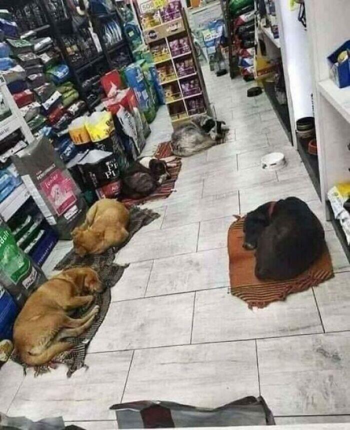 Владелец магазина пустил внутрь бродячих собак, чтобы согреть их холодными ночами