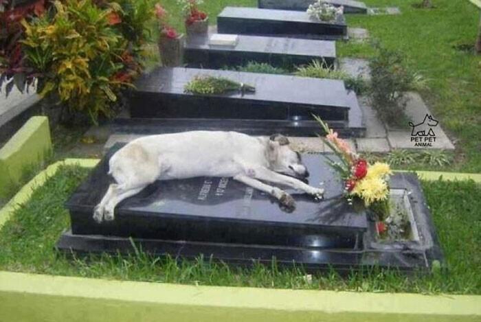 Пес по кличке Капитан каждую ночь спал на могиле своего хозяина на протяжении шести лет