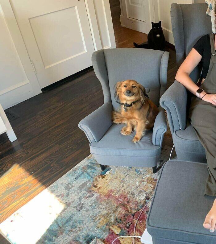 """""""Заказала своему псу мини-версию моего кресла. Как мало нужно для собачьего счастья!"""""""