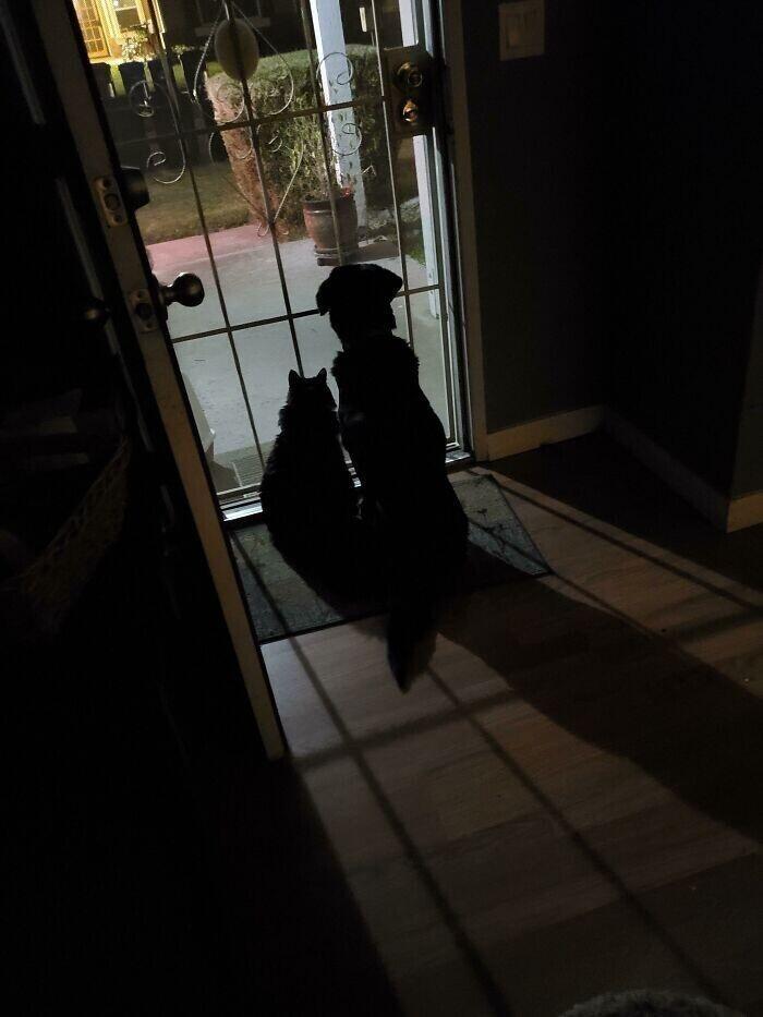 """""""Мой сын всегда пишет, когда он на пути домой, и я открываю для него одну дверь. Наш кот и пес всегда садятся и вот так ждут его прихода"""""""
