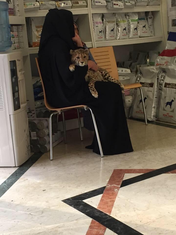 Домашние питомцы в Дубае могут быть разными
