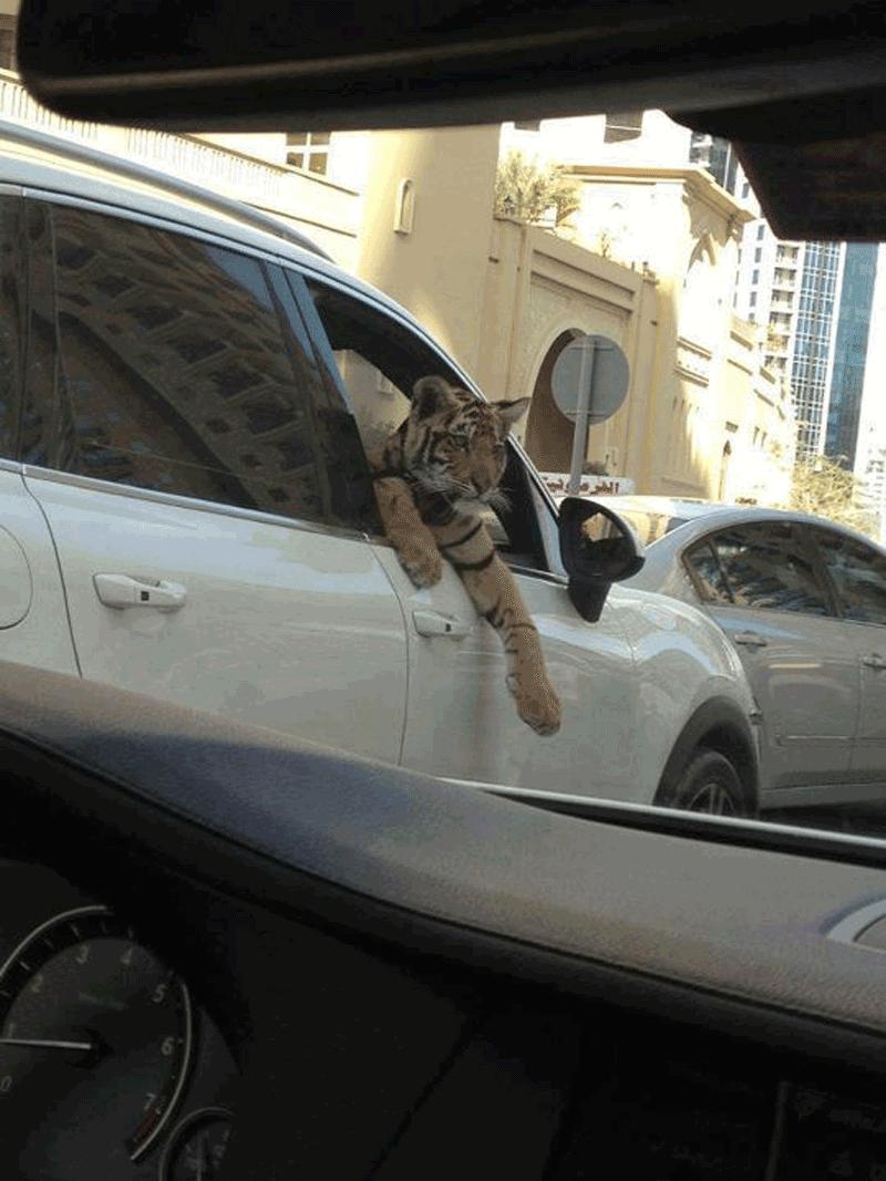 Это Дубай, детка!
