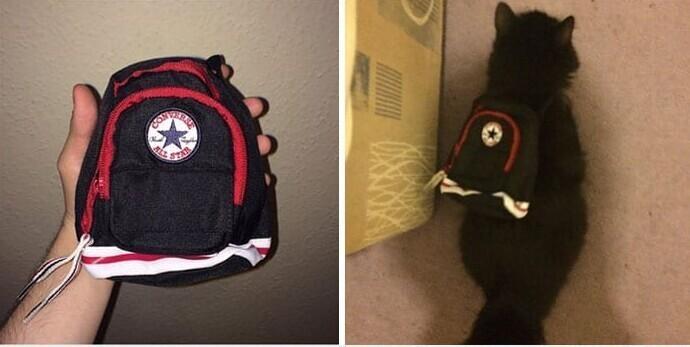 Этот рюкзак очень подошёл Барсику