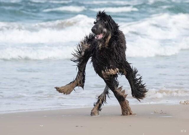 1. Ничего необычного, просто пес на пляже