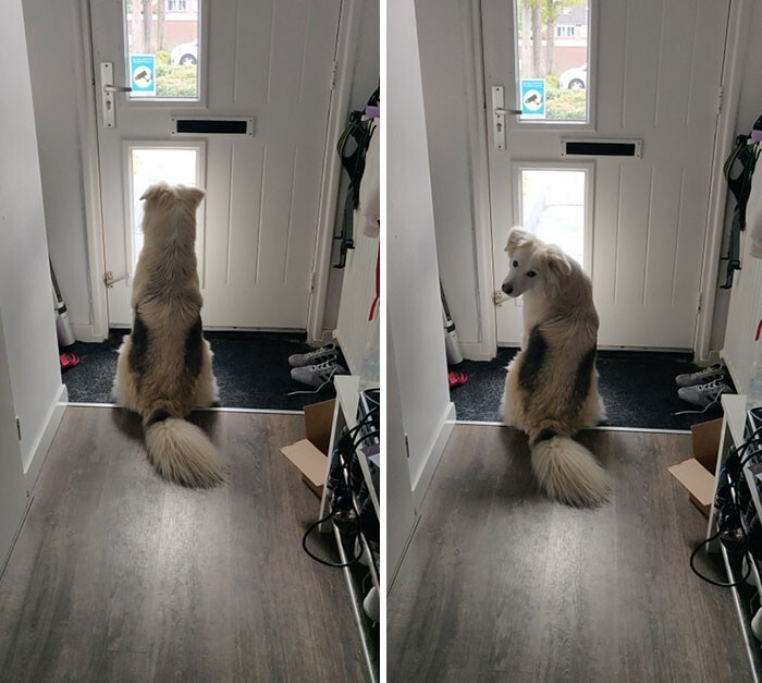 """27. """"Сказал своему псу, что скоро придет папа. Пес его обожает и терпеливо ждал его до самого прихода"""""""