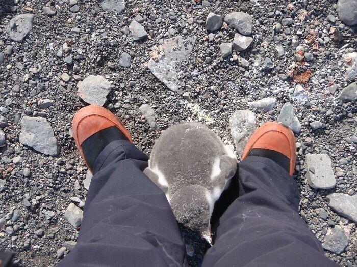 """1. """"Как-то раз в Антарктике я стала мамой"""""""