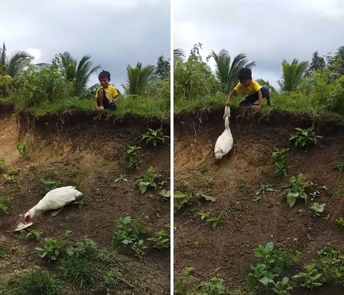11. Добрая утка принесла мальчику его шлепанец, который тот уронил с холма