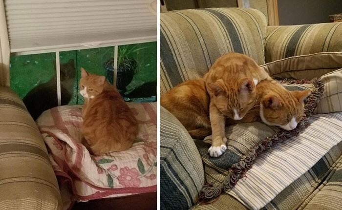4. Парень подобрал бездомного кота, которого повадился навещать его брат. Пришлось взять и его!