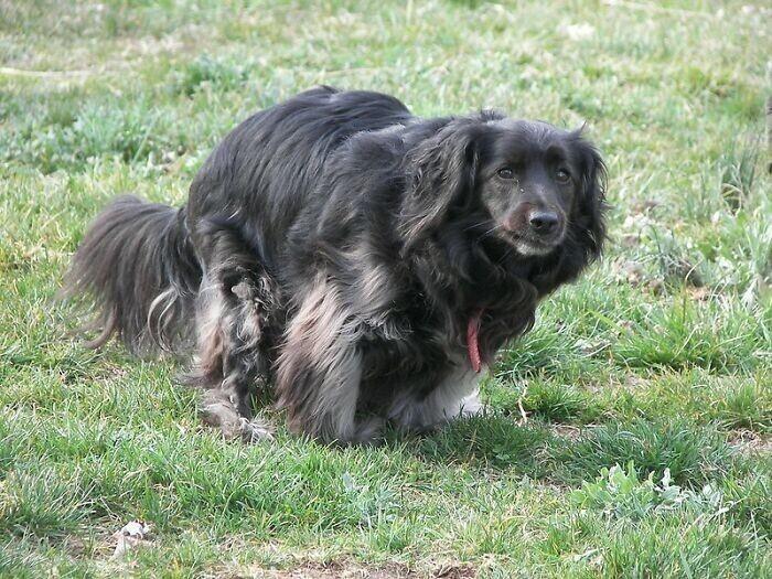 5. На Капри (Италия) вы должны убирать за своей собакой - иначе вас выследят с помощью ДНК