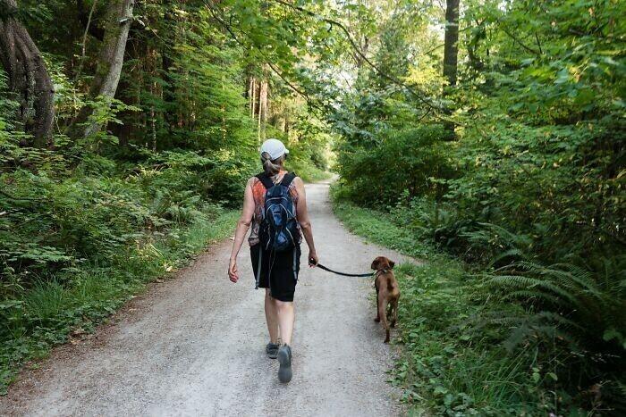 12. В Турине (Италия) по закону вы должны выгуливать собаку три раза в день