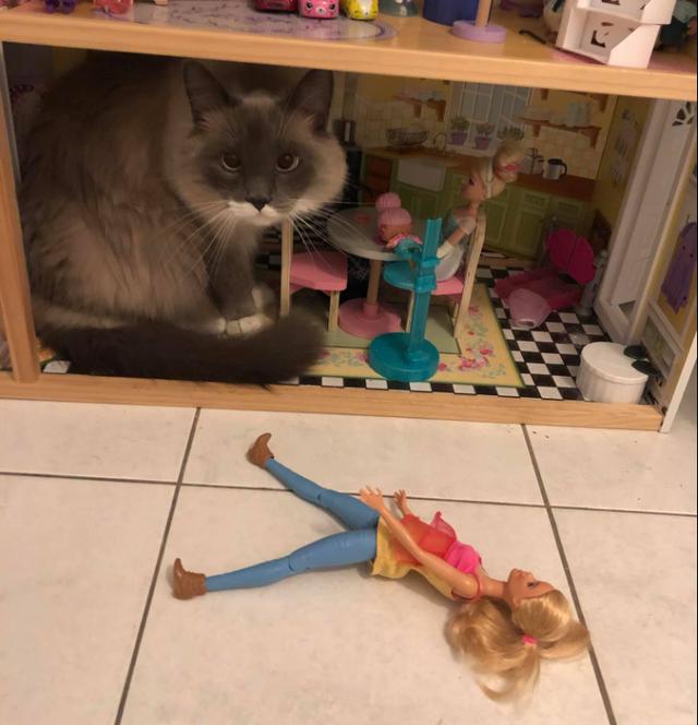 Она решила выгнать постоянных жильцов