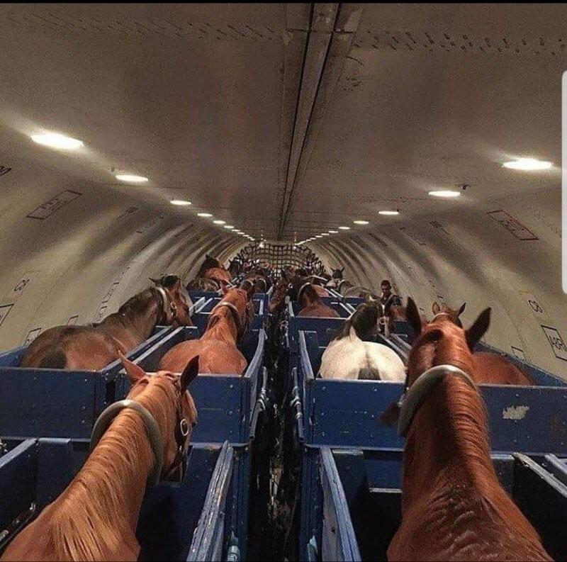 Так перевозят лошадей в самолётах