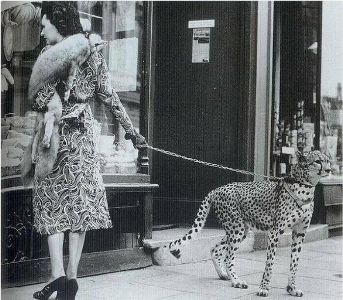 Американская актриса Филлис Гордон на прогулке со своим гепардом, 1939