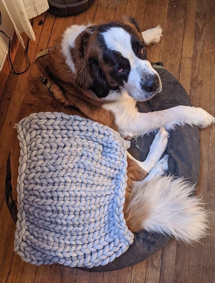 """37. """"Свекровь купила уютное одеяло из Китая. Собака для масштаба"""""""