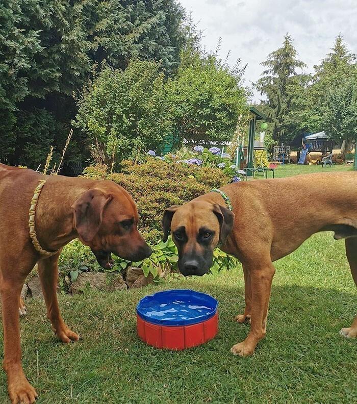 """5. """"Купили бассейн для собак. И вот что к нам приехало"""""""