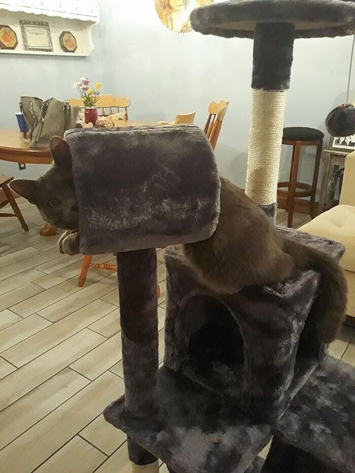 """8. """"Купил в Интернете кошачью башню, которая оказалась намного меньше, чем ожидалось. Мой кот все еще пытается быть благодарным за этот подарок"""""""