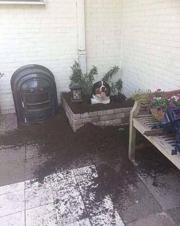 Кто-нибудь знает, что за странное растение?