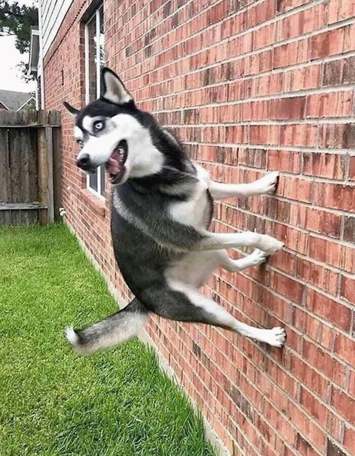 """Дорогая, наша собака опять ходит по стенам"""