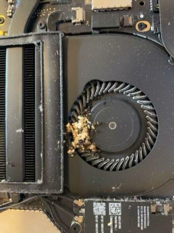 20. Клиентка: Мой MacBook Pro нагревается. Внутри вентилятора: колония муравьев