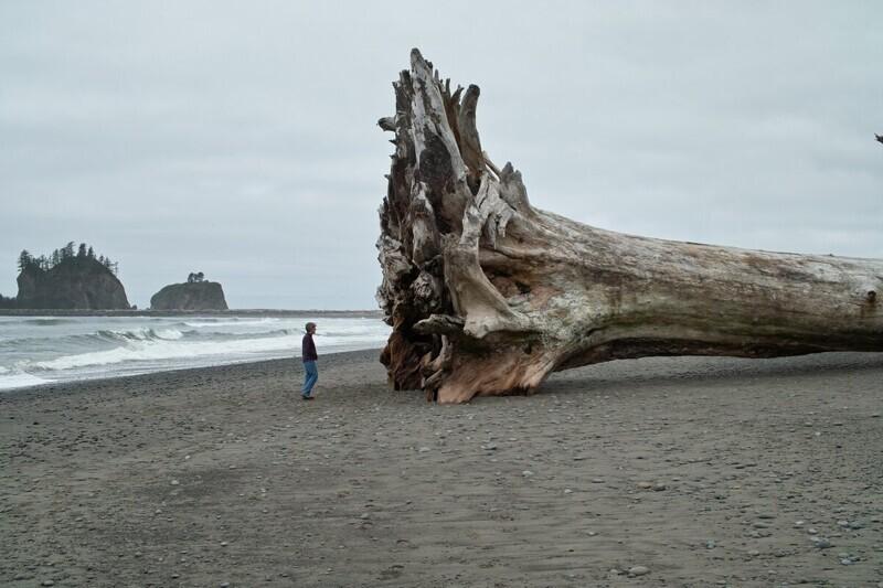 Опять какую-то мелочь выбросило на пляж Ла-Пуш, США