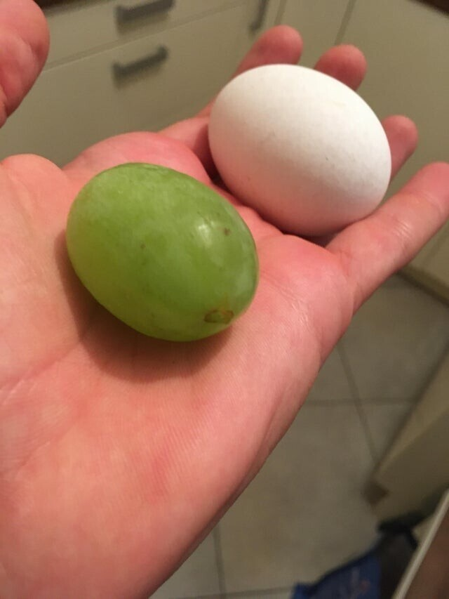 Виноградина размером с яйцо