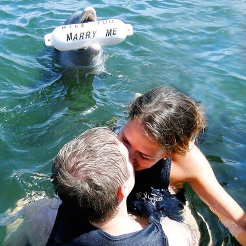 Предложение с дельфином