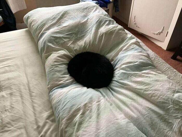 Булочка, которая оккупировала кровать
