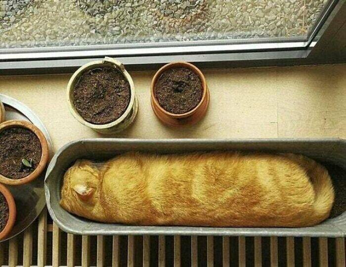 Кошачий багет