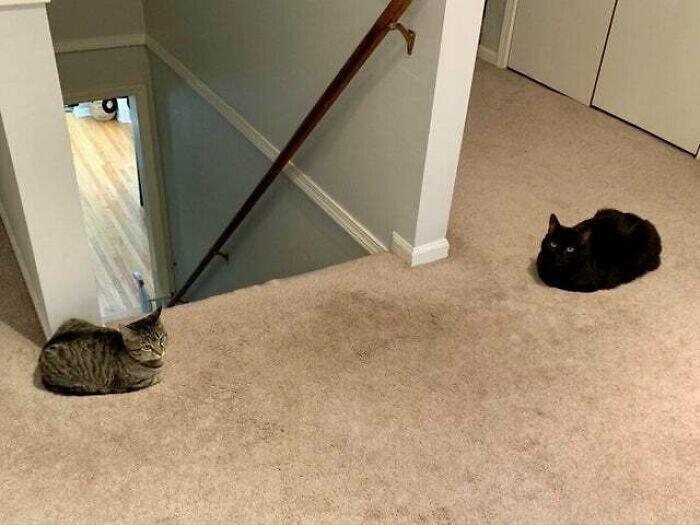 Кошачьих батонов много не бывает!