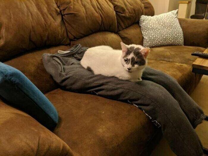 Подставные ноги специально для кота