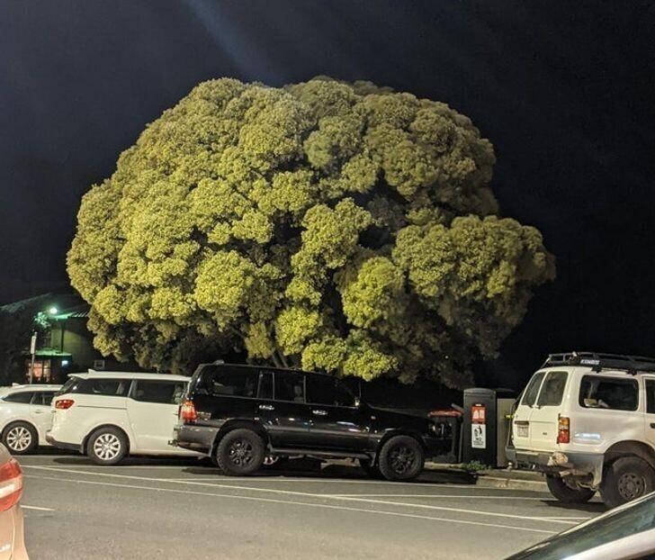 2. Часто вы видите деревья, настолько похожие на брокколи?
