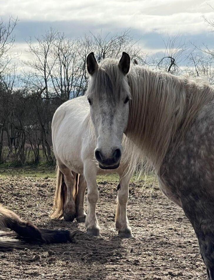 21. Сколько лошадей вы видите?