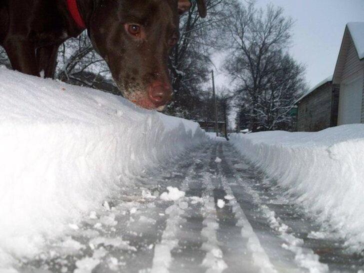 4. Осторожно, в городе гигантская собака!