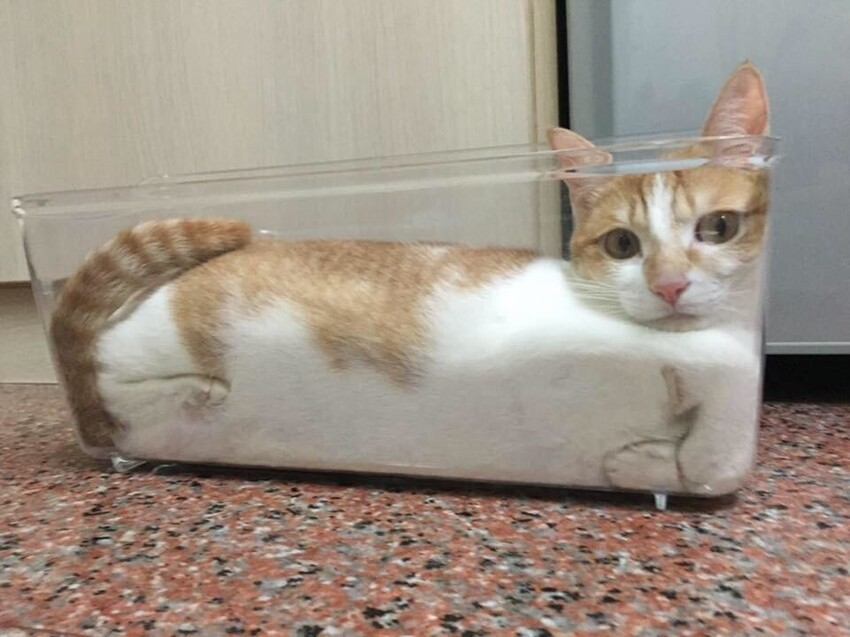 15 картинок о кошачьих повадках