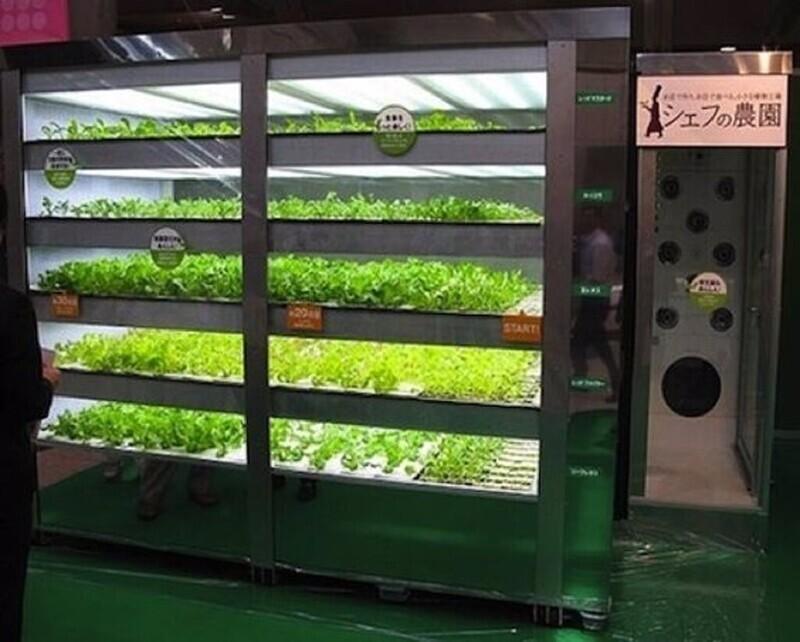 Автомат с салатом