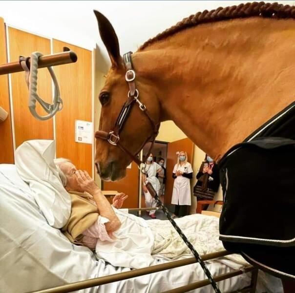 17. Во Франции 15-летний конь по кличке Пейо часто навещает неизлечимо больных пациентов в больнице. Конь сам выбирает, какого пациента навестить, и стучит копытом у их двери