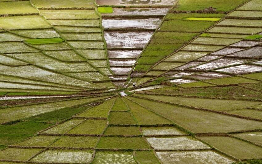 Если бы не человек, стоящий посередине, было бы почти невозможно поверить, что это рисовое поле