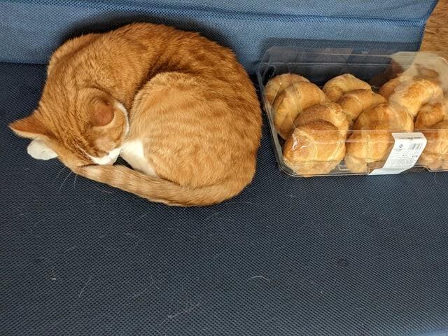 Кошка с потомством, а нет, показалось