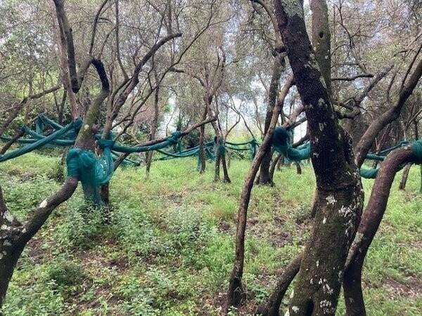 """""""Синие нитки между деревьями. Нашел в национальном парке Чинкве-Терре в Италии"""""""